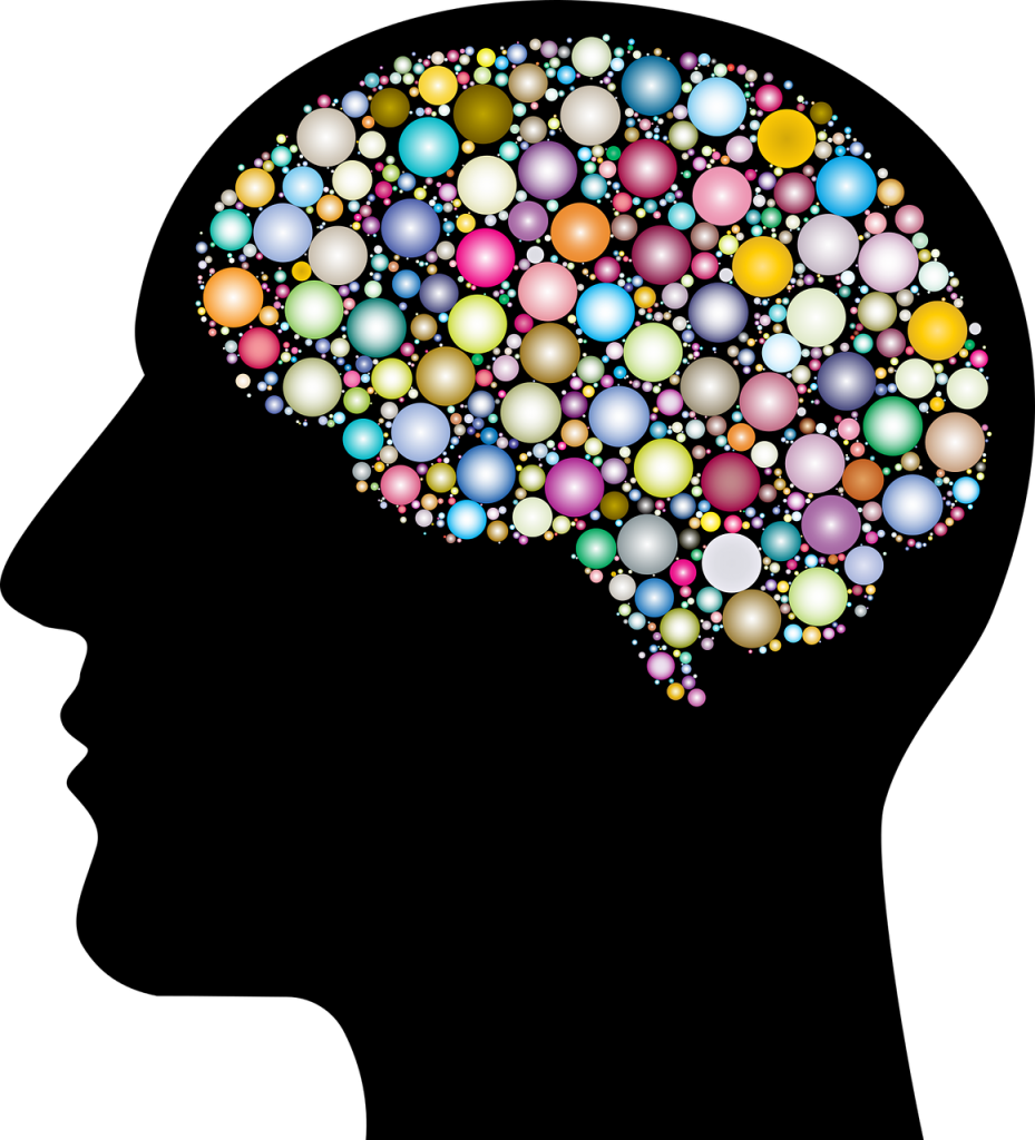 cranium, head, human-3199408.jpg